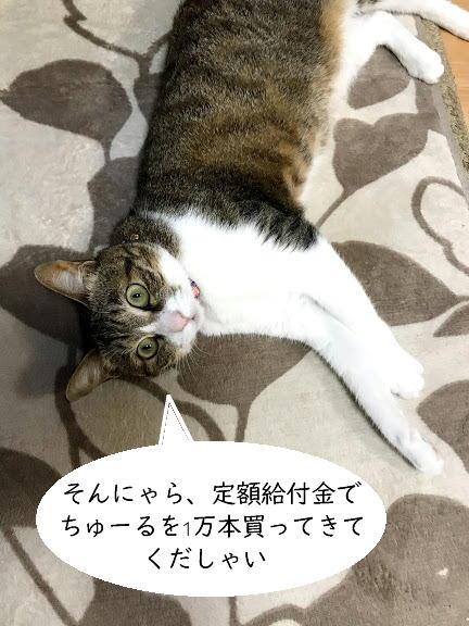 chiko0701-6.jpg