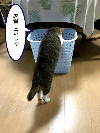 chiko0824-4.jpg