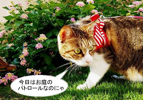 chiko1015-1.jpg