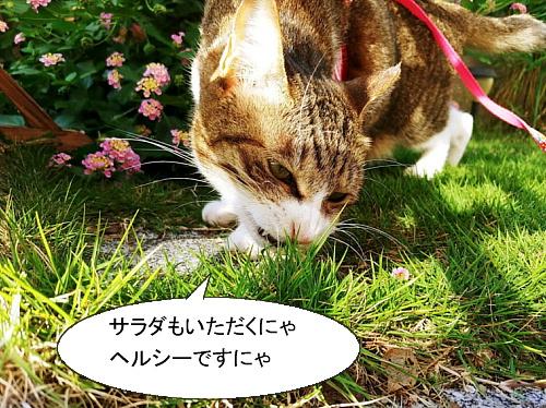 chiko1015-2.jpg