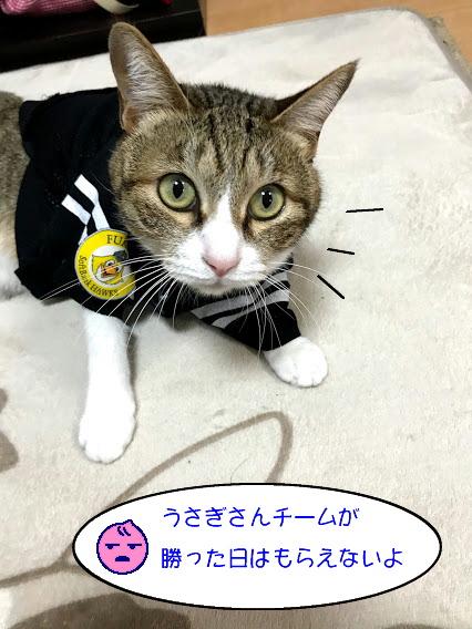 chiko1126-4.jpg