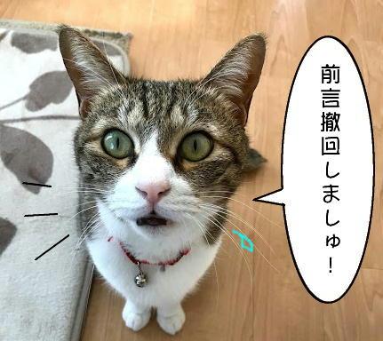 chiko1126-5.jpg
