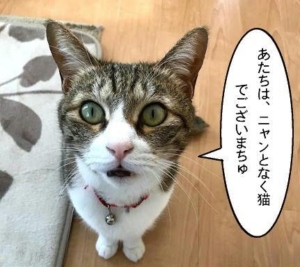 chiko20210225.jpg