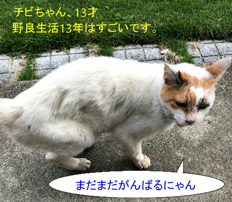 猫漫画20200927