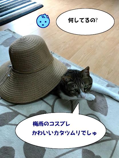 katatsumuri1.jpg