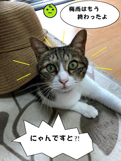 katatsumuri2.jpg