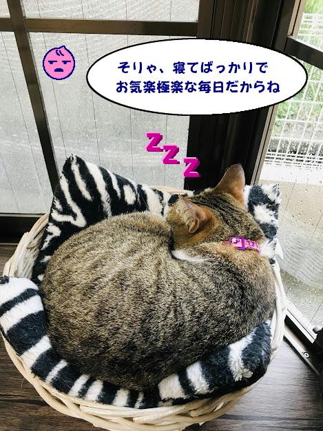 katatsumuri4.jpg