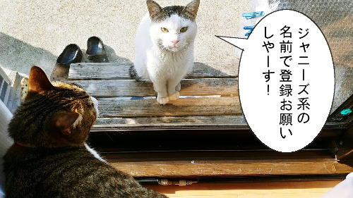 猫漫画4/1