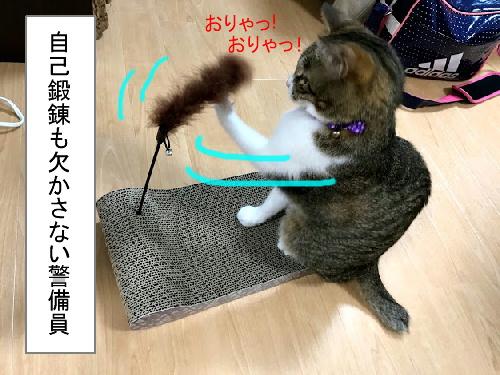 猫漫画 自宅警備