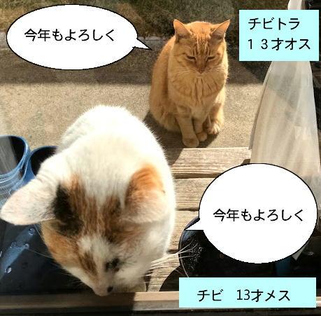 kotoyoro-neko1.jpg