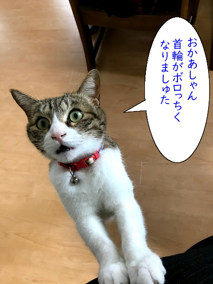 kubiwa1.jpg
