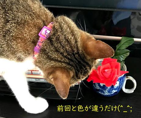 kubiwa5.jpg