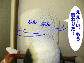 net31.jpg