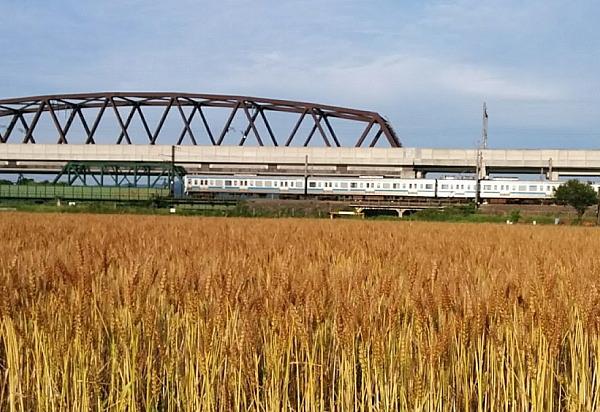 麦秋と電車