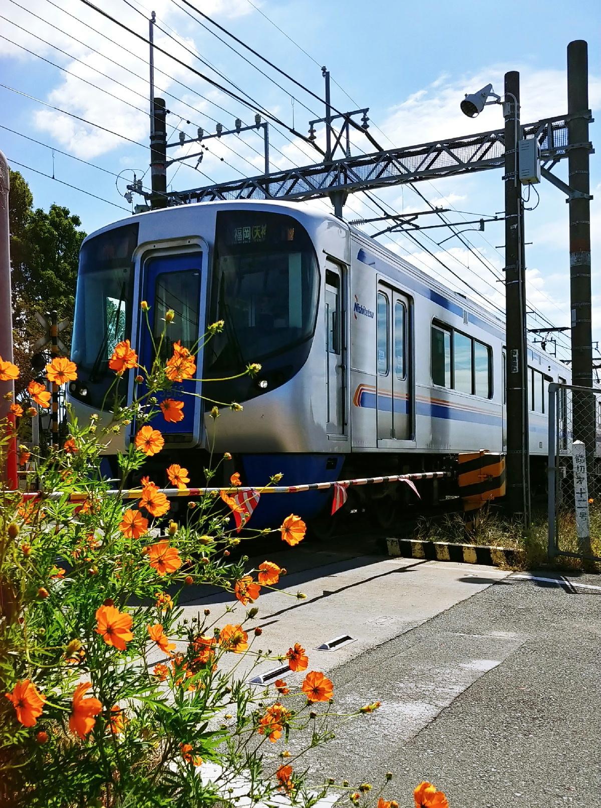 西鉄電車とコスモス