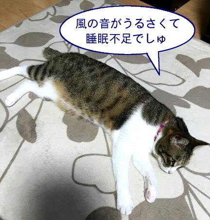 taifuu1.jpg