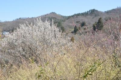 hanamiyama01.jpg