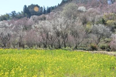 hanamiyama02.jpg