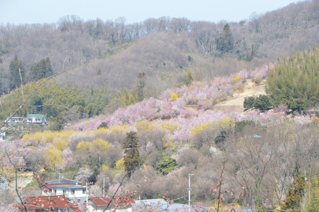 hanamiyama03.jpg