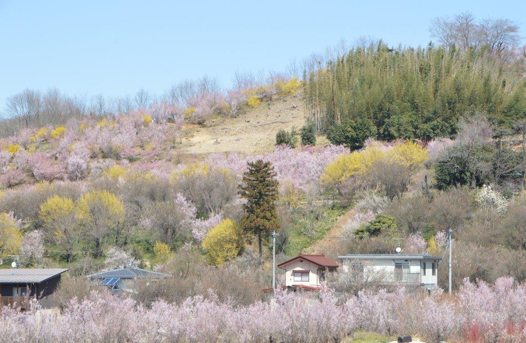 hanamiyama04.jpg