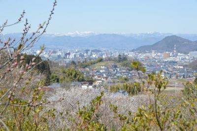 hanamiyama05.jpg
