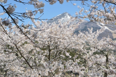 kamegajo042105.jpg