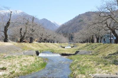 kannonji-sakura02.jpg