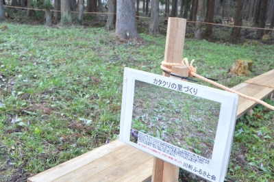 kannonji-sakura115.jpg