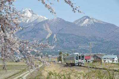 kannonji-sakura123.jpg