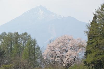 kannonji-sakura153.jpg