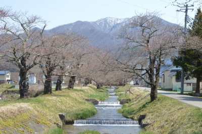 kannonji-sakura52.jpg