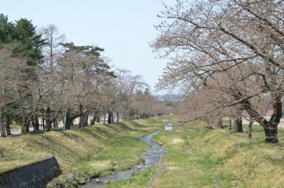 kannonji-sakura60.jpg