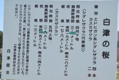 kasumizakura03.jpg