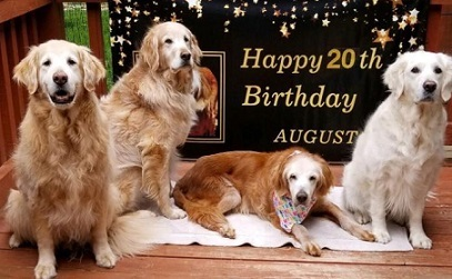 oldest-golden-retriever-exlarge-169 (2)
