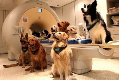 fMRI装置の中で動かないよう、イヌたちをしつけるには数カ月を要した