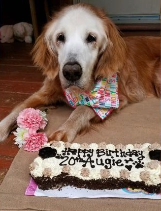 oldest-golden-retriever-exlarge-169.jpg