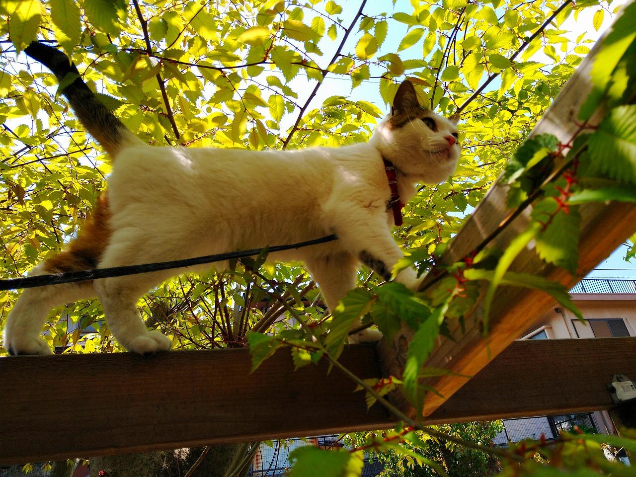 木登りもふにゃん