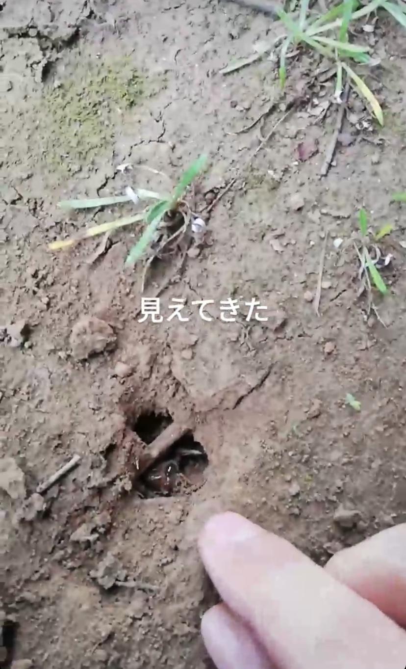 piyoko20200814-5.jpeg