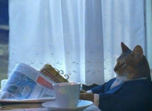 Cat in suit reading paper