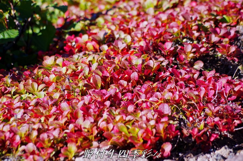 03s-K70-20200902-urashimatsu-0.jpg