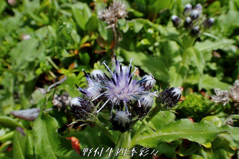 07s-TG3-20200717-usuyukitohiren-0.jpg