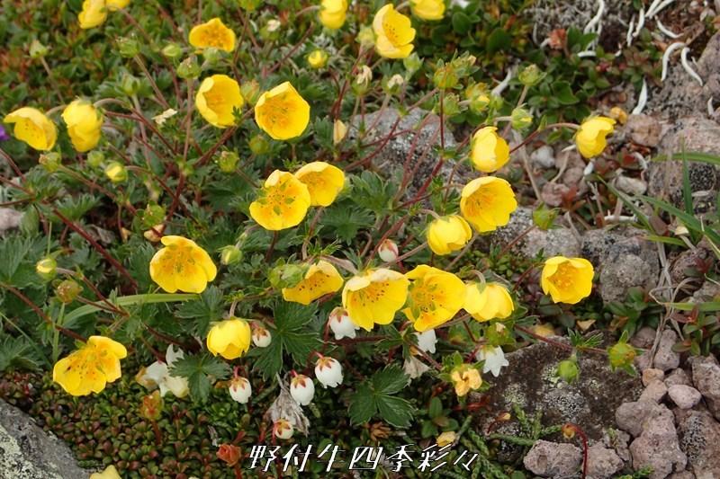 10s-TG3-20200711-miyamakinbai-0.jpg