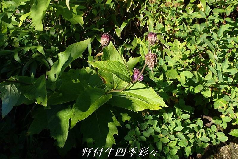 18s-Ca-20200902-chishimaazami-0.jpg
