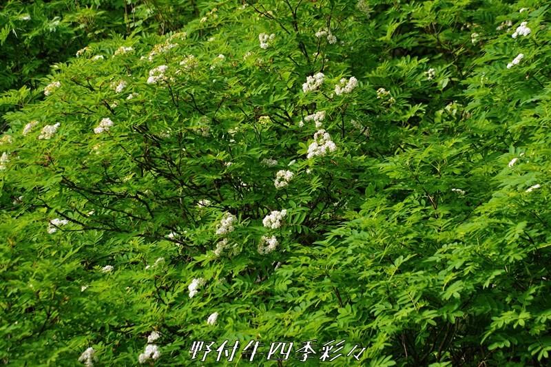 29s-K70-20200717-urajironana-0.jpg