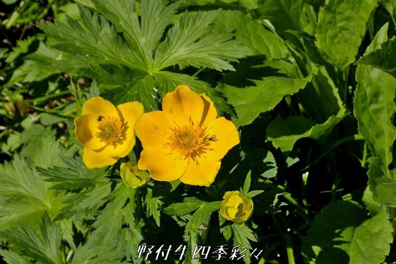 42s-TG3-20200717-chishimanokinbaiso-0.jpg