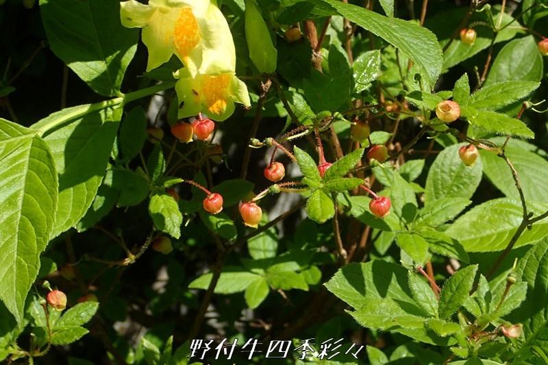 47s-TG3-20200717-koyourakututuji-0.jpg