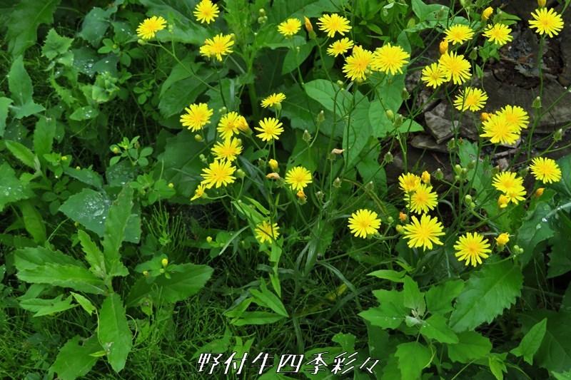 s-Ca-20200723-yanetabirako-0.jpg