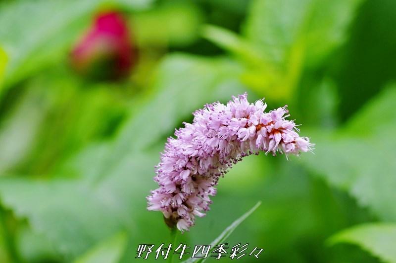 s-K70-20200620-095206-0.jpg