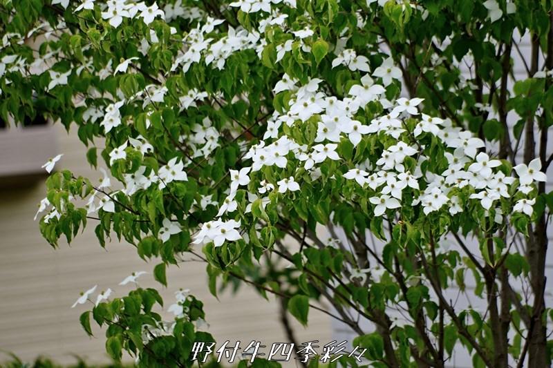 s-K70-20200628-yamaboushi-0.jpg