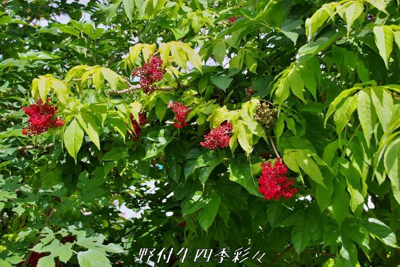 s-K70-20200715-ezoniwatoko-0.jpg